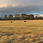 Lessons from the Long Paddock